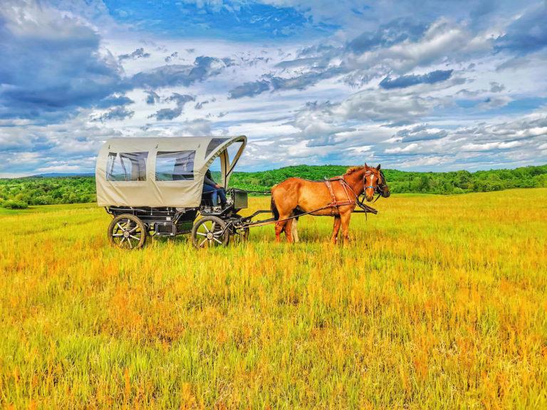 Wild Spring Ranch Western Wagon